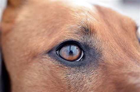 puppy eye infection help network out for a eye infection during the summer