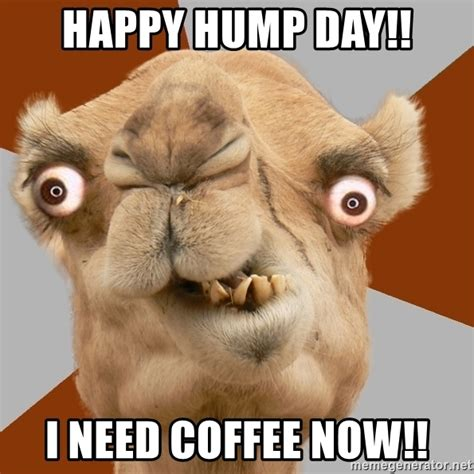 happy hump day i need coffee now crazy camel lol