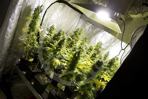 bases essentielles pour culture de cannabis en int 233 rieur