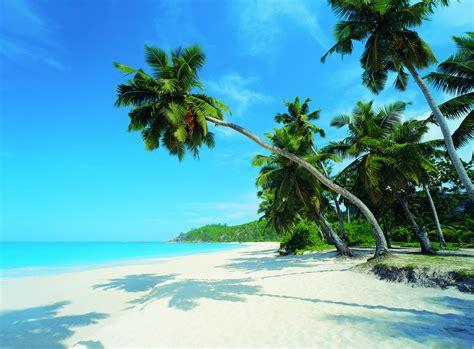 The Paradise tock paradise message board investorshub