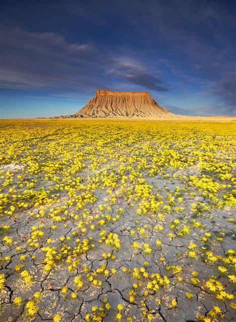 meteo co dei fiori con le giuste condizioni meteo il deserto dello utah