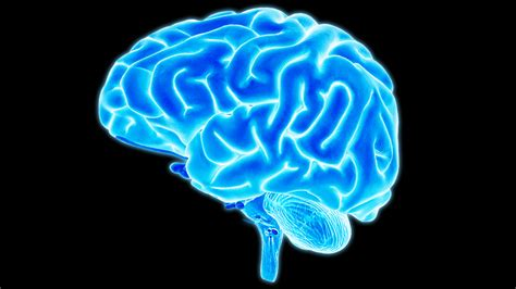 for the brain 6 ways meditation can change the brain muse the brain