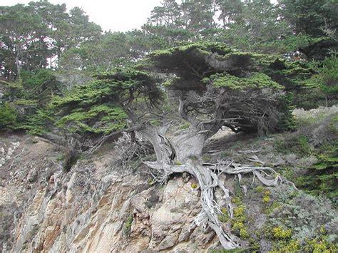 imagenes de la naturaleza raras 193 rboles con formas raras en bosques que parecen de fantas 237 a