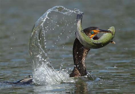 10 Amazing Portraits Of Animals 10 amazing animals fishing stock photos