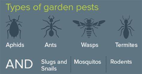 types of garden pests garden pests the news and bad news ask mr