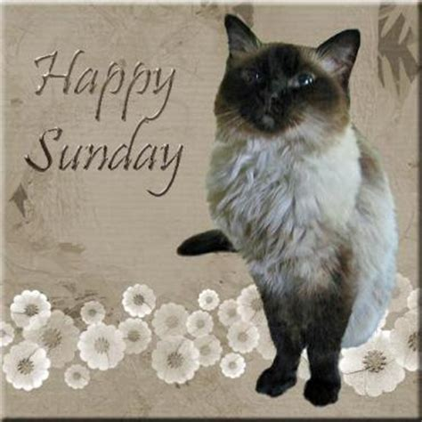 A Cat On A Sunday by The Rocky Mount Meezers Happy Sunday