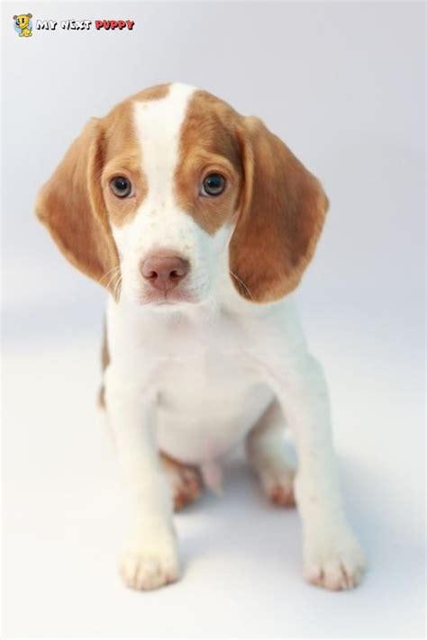 my next puppy my next puppy 37 photos 18 reviews pet 13991 metrotech dr chantilly