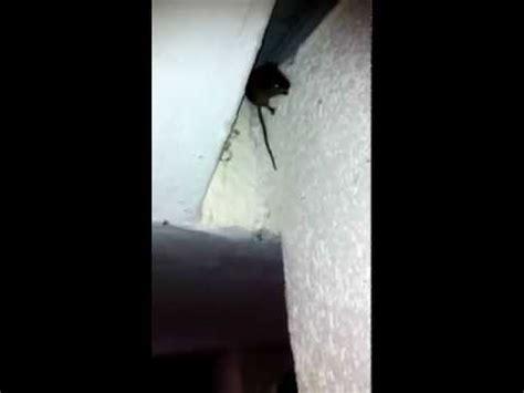 Auf Der Wand by Maus An Der Wand