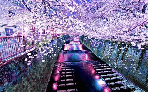 cool korean wallpaper cherry blossoms wallpapers wallpaper cave