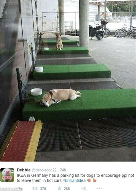ikea dogs ikea designs parking bays so customers can leave pets outside while shopping daily mail