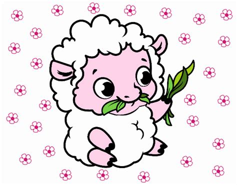 imagenes de ovejas faciles para dibujar dibujos de ovejas para colorear dibujos net