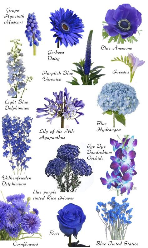 names of purple 17 best ideas about flower names on flower