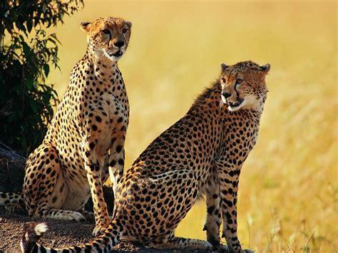 african animals  kids list   african animals