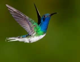 even hummingbirds pause eileen rockefeller