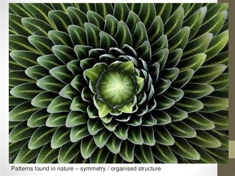 pattern and structure found in nature apart together