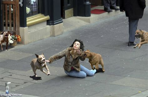 attack dogs stray dogs attack johansson pictures freaking news
