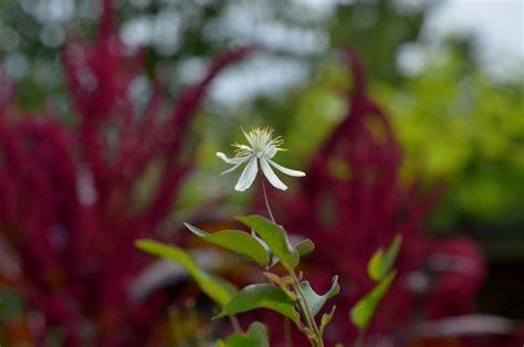 blumen im garten pflanzen pflanzen und blumen im garten seite 2