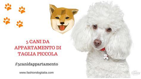 cani da appartamento di piccola taglia cani da appartamento di taglia piccola 5 razze ideali