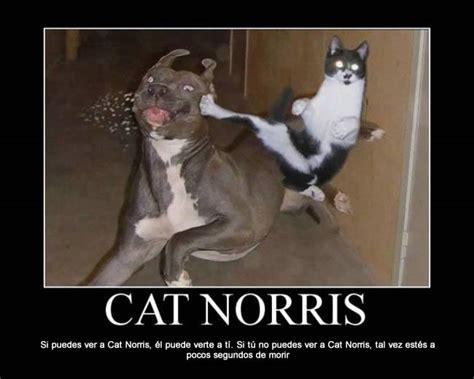 imagenes chistosos en facebook memes chistosos de perros imagenes chistosas