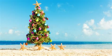myrtle beach christmas tree farm top 10 things to do in myrtle in december myrtlebeach