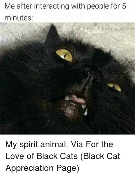 Black Cat Meme - black cat memes cat free download funny cute memes