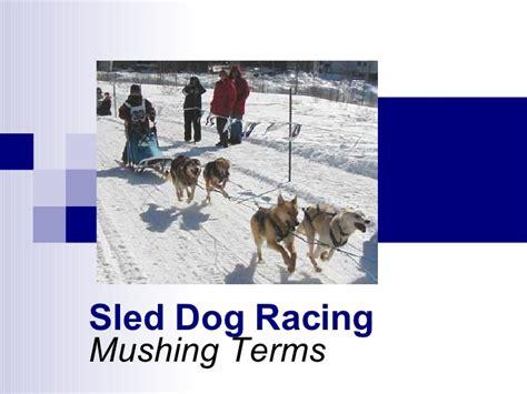 mush sled sled racing mushing terms