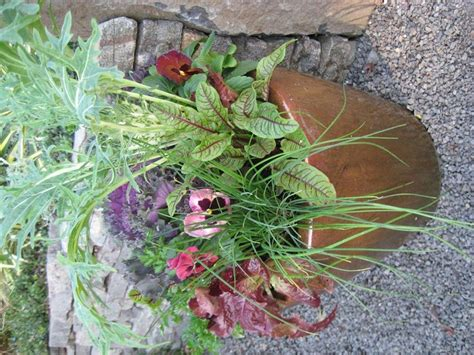 edible container garden 10 best images about edible container gardens on