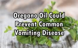 Oregano During A Thc Detox by Oregano Could Help Recover From Contagious