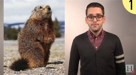 groundhog day in canada why groundhog day doesn t matter in canada