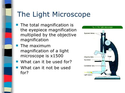 what is a light microscope used for electron microscope