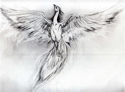 tattoo phoenix sketch pin pin phoenix sketch tattoo picture to pinterest on