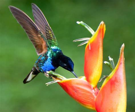 imagenes increibles de colibries el arte de volar de los colibr 237 es rtve es