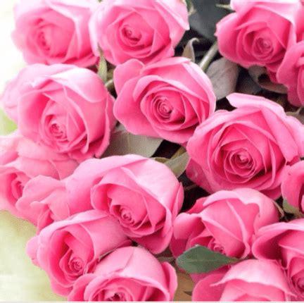 imagenes wasap rosa imagenes de flores para felicitar por whatsapp