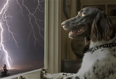 why are dogs scared of thunder tips on how to deal with a thunder phobic by katelyn schutz cpdt