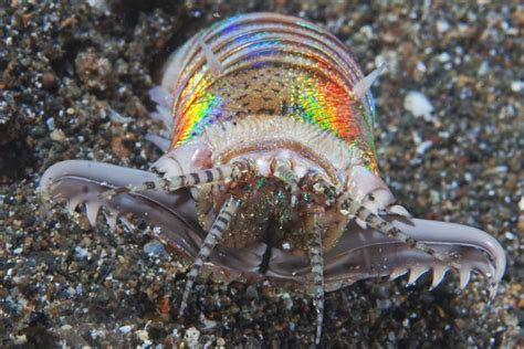 absurd creature of the week 10 foot bobbit worm is the