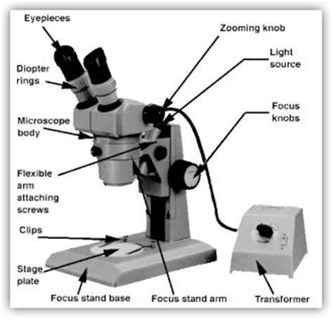 compound light microscope facts image gallery microscope structure