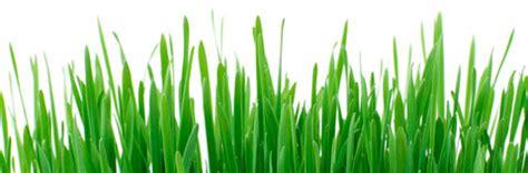 noleggio attrezzi da giardino noleggio attrezzi da lavoro giardinaggio