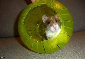 hamster swing rodents like hamsters only need to scer about to boost
