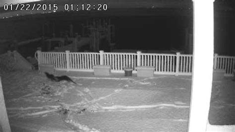 snow boating near me otters playing in snow the hull truth boating and