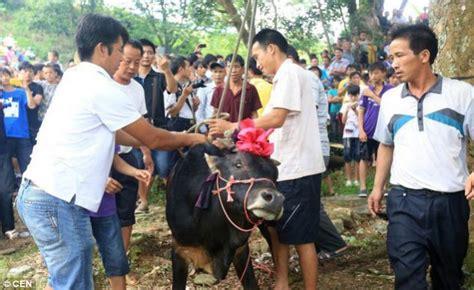Lu Gantung 16 festival sadis gantung banteng sai mati di cina ruang hati berbagi