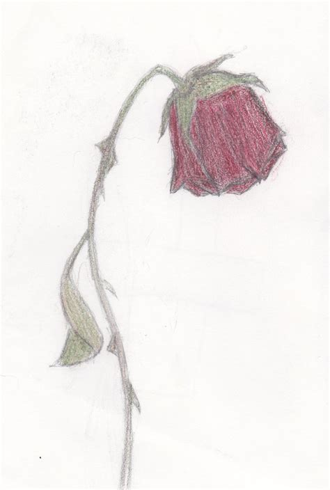 dying rose by maroon biochemist on deviantart