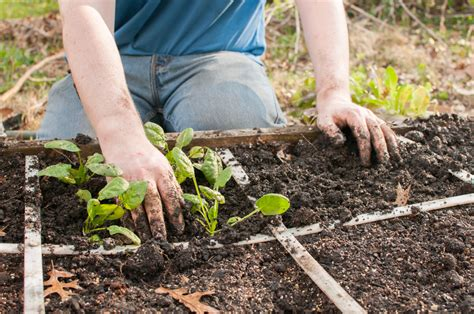 Square Foot Gardening Ideas Square Foot Gardening On Tips From Mel B S Legacy
