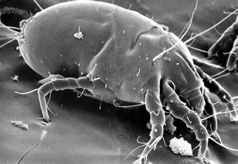 acari da materasso come tenere gli insetti lontani da casa