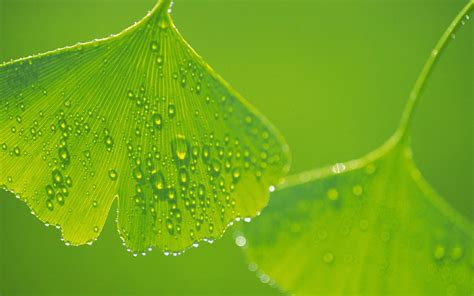 wallpaper of green leaves wallpapers green leaf wallpapers