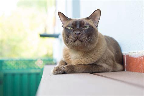 cat and hospital cat parks cat runs and cat enclosures perth cat hospital