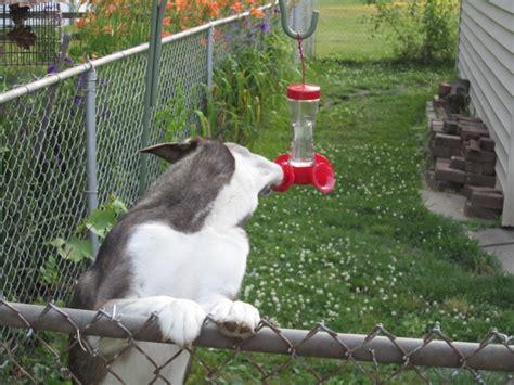 how much sugar for hummingbird feeder home improvement
