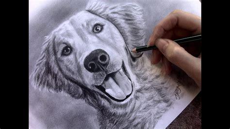 speed drawing dog youtube