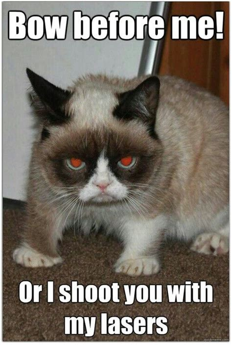 Sassy Cat Meme - 2419 best sassy cats images on pinterest