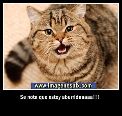 imagenes de amor con gatos imagenes de gatos para etiquetar con versos de amor auto