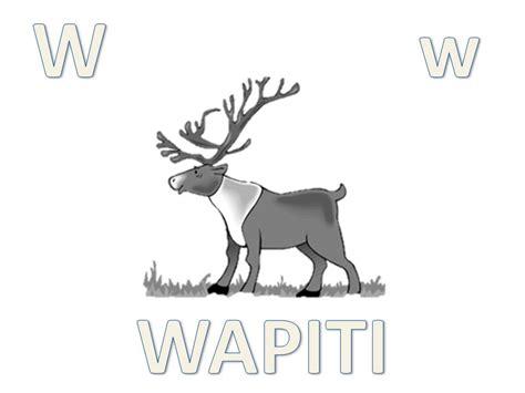 imagenes de animales con w abecedario animal para colorear